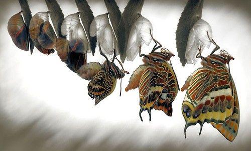 Aaa papillon